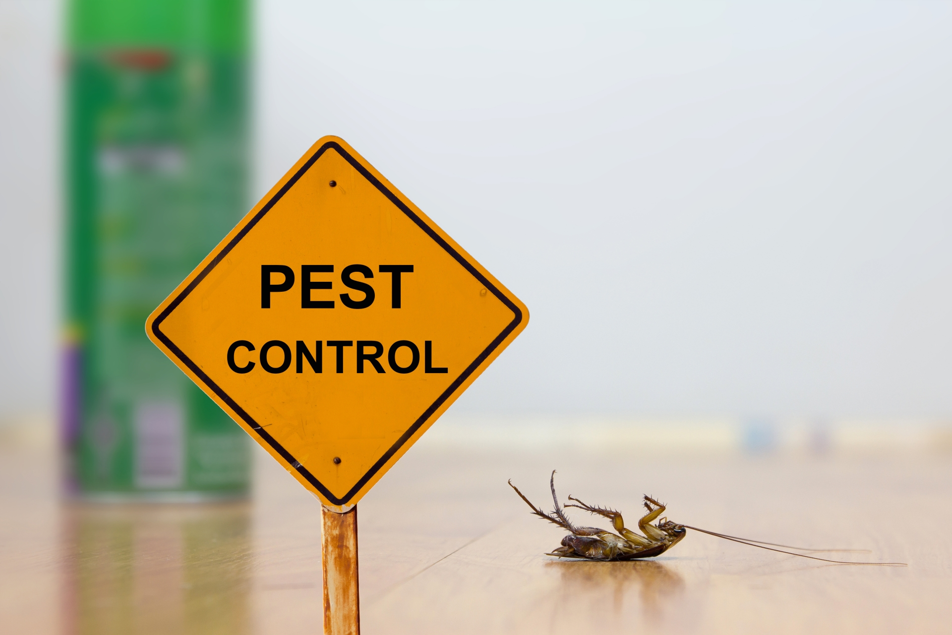 24 Hour Pest Control, Pest Control in West Horsley, East Horsley, Effingham, KT24. Call Now 020 8166 9746