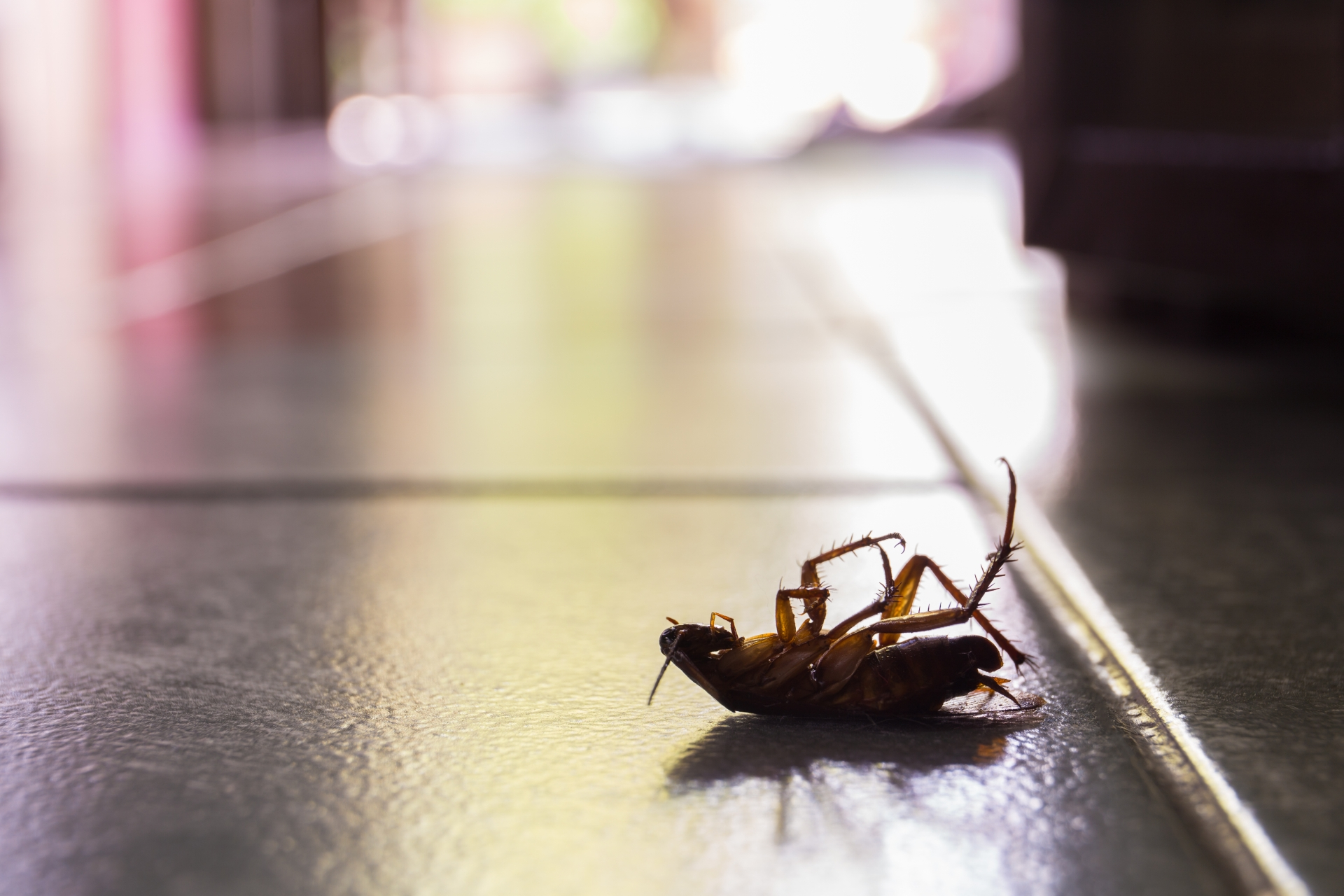 Cockroach Control, Pest Control in West Horsley, East Horsley, Effingham, KT24. Call Now 020 8166 9746
