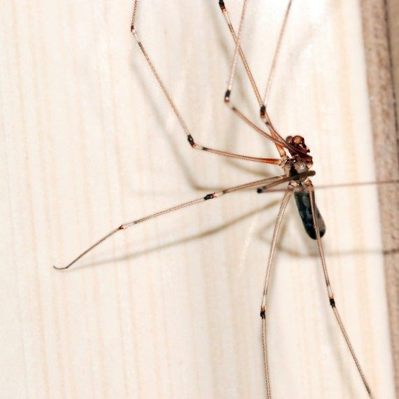 Spiders, Pest Control in West Horsley, East Horsley, Effingham, KT24. Call Now! 020 8166 9746